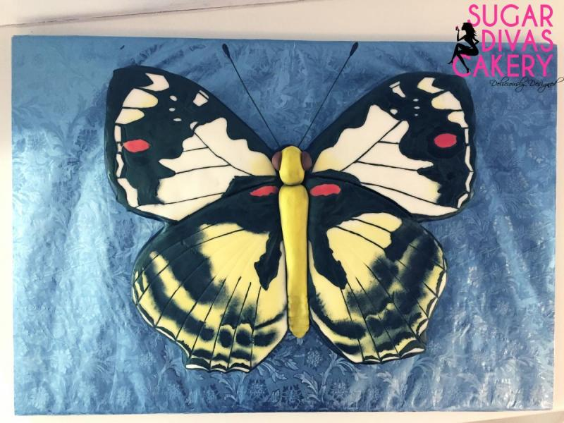 2d butterflyanimal bug insect